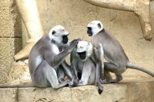green-monkeys-112275_1280