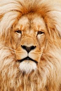 africa-african-animal-cat-41315