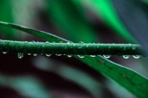 pexels-photo-52851