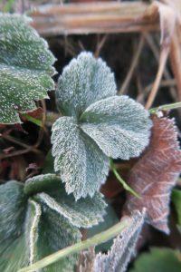 zimni-byliny1